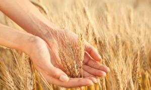 teresa montesarchio cittadelmonte i celiaci potranno mangiare la farina alimentazione strategica